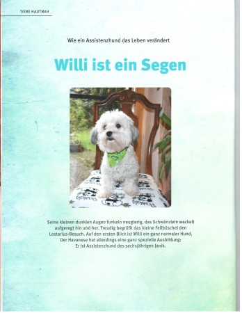Assistenzhund Willi