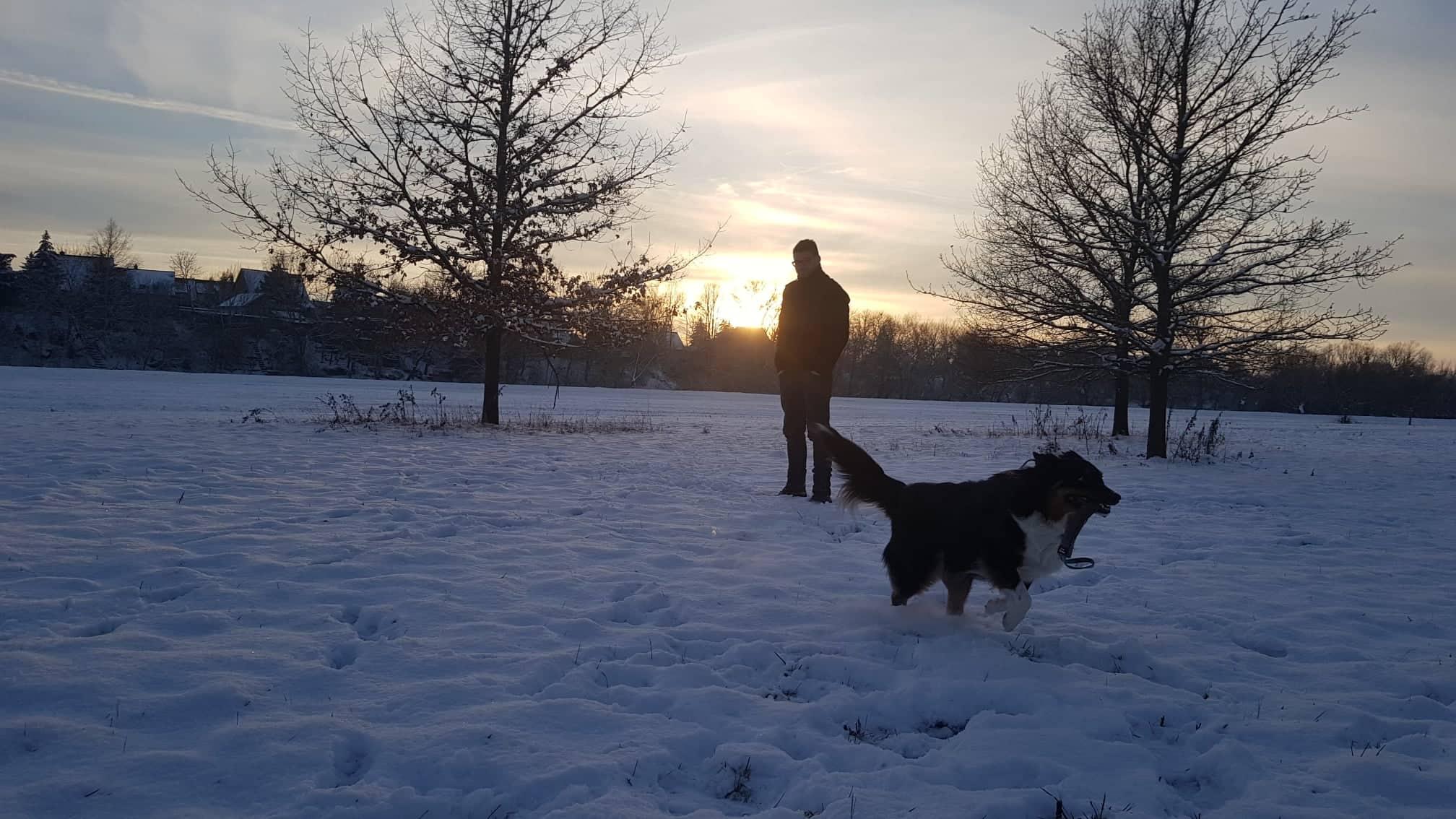 Besuchshund und Therapiehund in Goslar